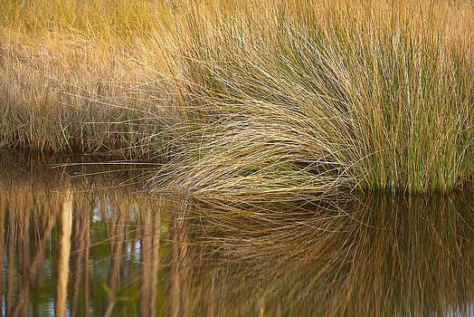 Bill Chambers - Spartina Grass