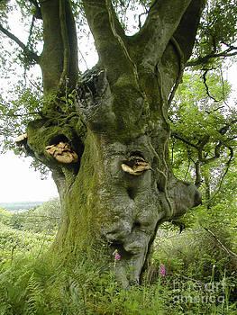 Special Tree - Glenanaar by Anne Marie ODriscoll