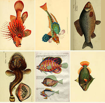 Specimens of the cold sea by Emis Miko