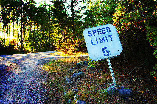 Speed Limit by Cindy Bray