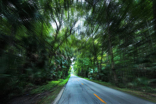 Speeding through the Forest by George Ferreira