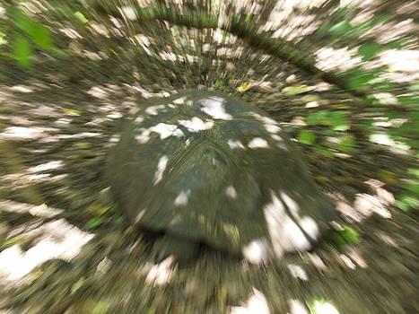Speeding Tortoise by David Otter