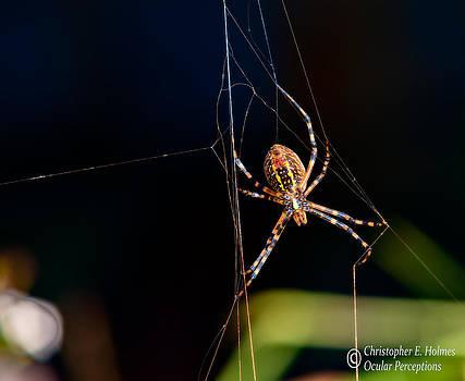Christopher Holmes - Spider