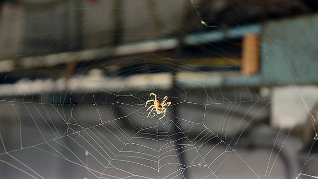 Spider Friend by Mo  Khalel