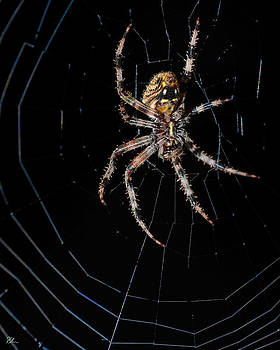 Spider in Web by Pat Scanlon