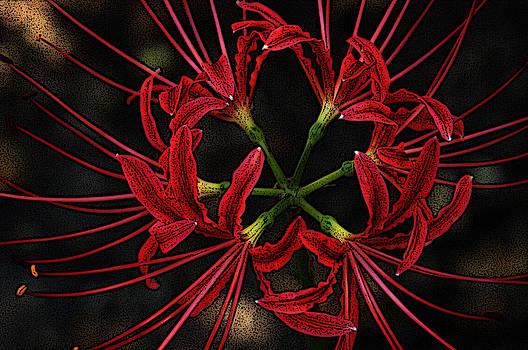 Joe Bledsoe - Spider Lily