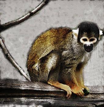 Joe Bledsoe - Squirrel Monkey
