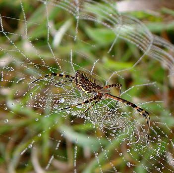 Rosanne Jordan - Spider on a Jeweled Web