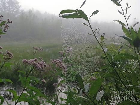 Jonathan Welch - Spider Web