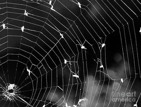 Spider Web by Susan Montgomery