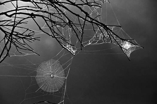 Spider Webs by Penny Roberts