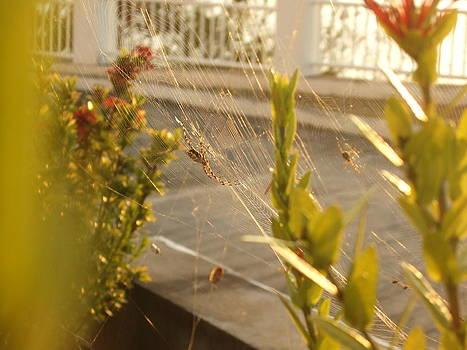 Spiders by Katerina Naumenko