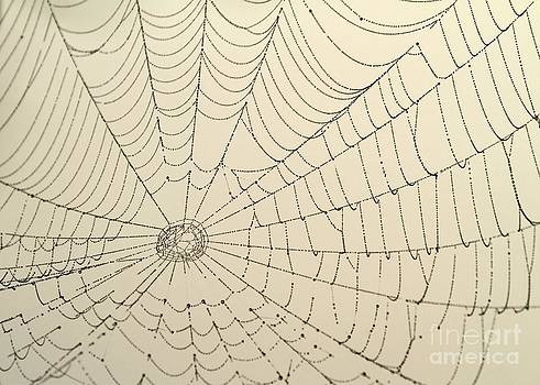 Sabrina L Ryan - Spiderweb at Dawn