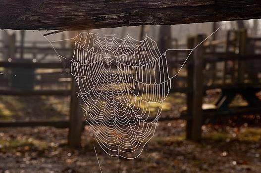 Spiderweb Dew by Larry Bodinson