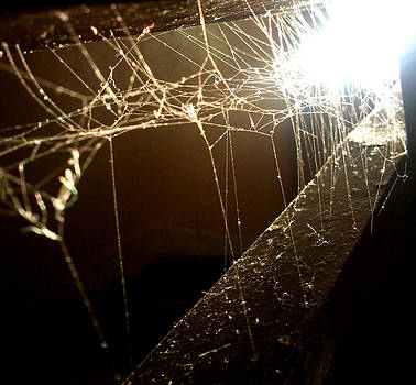 Spiderweb by Lucy D