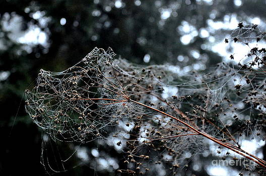 Spiderwebs On The Meadow Rue by Tanya  Searcy