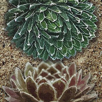 Spiky shades by Helena Marais