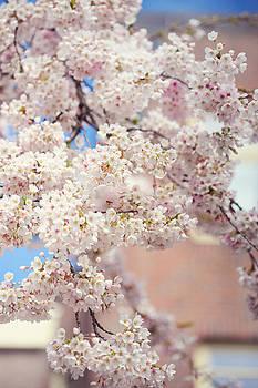 Jenny Rainbow - Sping Abundance. Pink Spring in Amsterdam