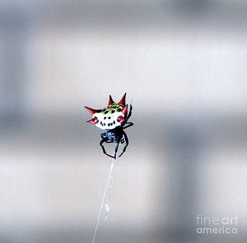 Linda Rae Cuthbertson - Spiny Orb Weaver Spider 2014
