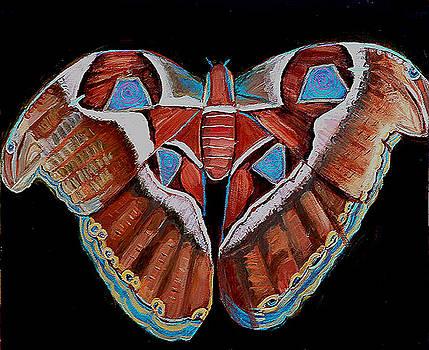 Shira Chai - Spiral Butterfly III