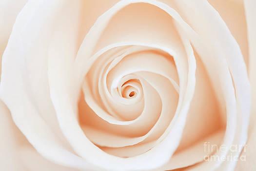 Lisa McStamp - Spiral of a Rose