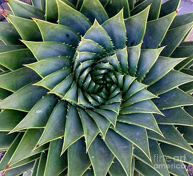 Spiral of Natures Perfection by Sylvie Heasman