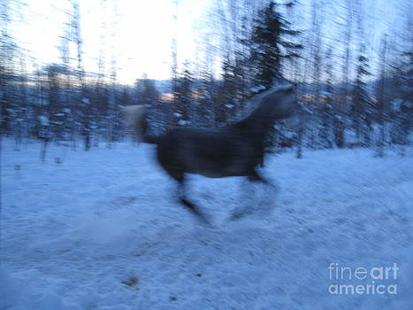 Spirit Horse by Elizabeth Stedman