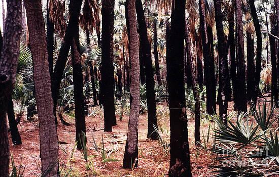 Spirit in the Trees by Steven Valkenberg