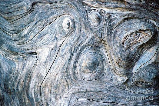 Douglas Taylor - SPIRIT IN THE WOOD