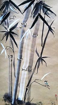 Casey Shannon - Spirit like Bamboo