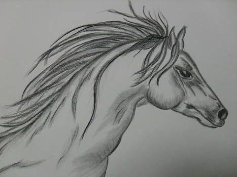 Spirit Of A Horse..BW by Ginny Youngblood