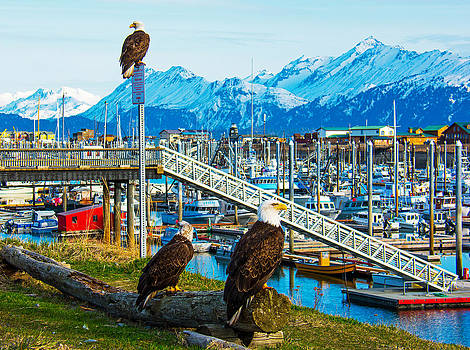 Debra  Miller - Spirit Of Homer Spit Boat Harbor
