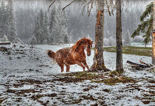 Spirited Dun in Winter by Skye Ryan-Evans