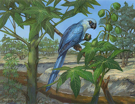 Spix's Macaw by ACE Coinage painting by Michael Rothman
