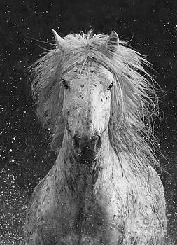 Splash by Carol Walker