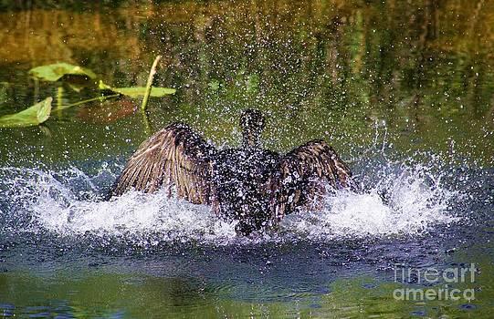 Splash by Chuck  Hicks