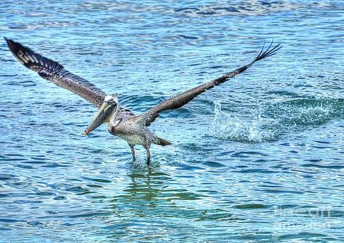Splash Landing by Debbi Granruth