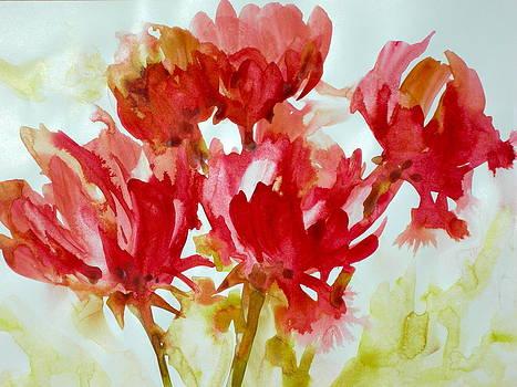 Splash of Color by Becky Taylor