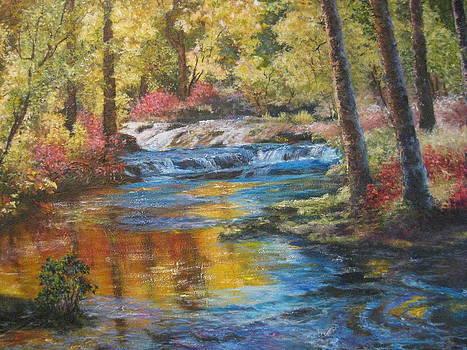 Splash of Color by Carol Bitz