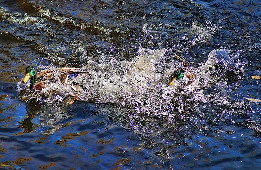 Joe Bledsoe - Splashdown