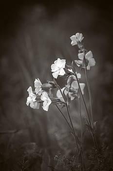 Splendor in the Grass II by Alan Norsworthy