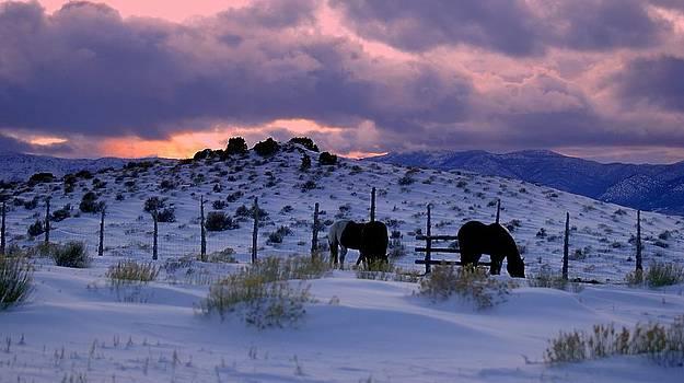 Splendor Of Winter  by Jeanne  Bencich-Nations