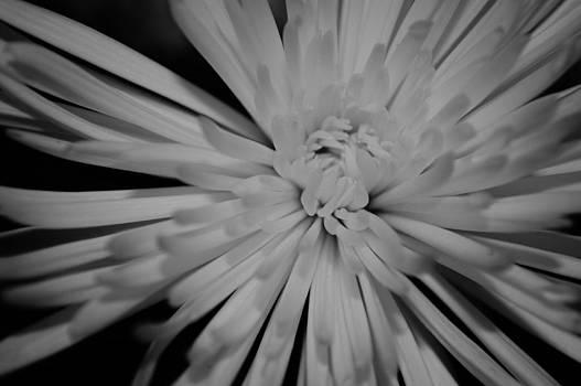 Splintered Hope by Tara Miller