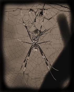 Spokey Spider by Suzie Banks