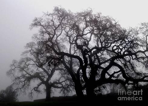 DJ Laughlin - Spooky Oak Trees