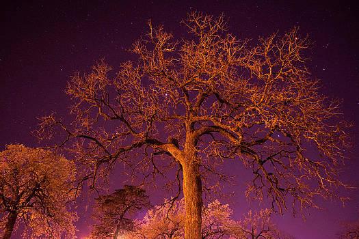 Spooky Tree by Jason Brow