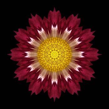Spoon Chrysanthemum I Flower Mandala by David J Bookbinder