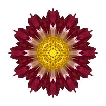 Spoon Chrysanthemum I Flower Mandala White by David J Bookbinder