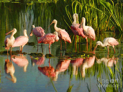 Grace Dillon - Spoonbill Congregation