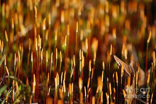 Sporophyte Forest by Evelyn Allen